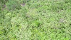 Aerial Dona Marta Hills and forest Rio de Janeiro Stock Footage
