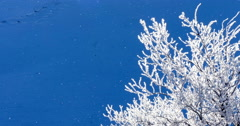 Snowflakes blowing in wind near icy tree Stock Footage