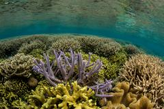 Coral reef scene, hard corals. Stock Photos