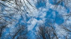 Sky with clouds behind trees, timelapse Stock Footage