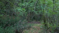 Footpath in forest - stock footage
