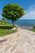 Green tree and pathway to the sea - stock photo