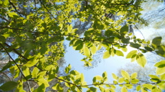 Leaves against a bright blue sky Stock Footage