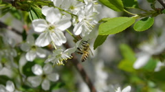 Trees blooming in the garden bee flying clear sky nature spring summer beautiful Stock Footage