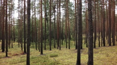walking in pine forest gimbal stabilized, strong motion blur - stock footage