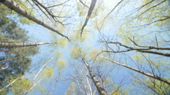 Spring Sun Shining Through Canopy Of Tall Trees Stock Footage