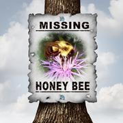Honey Bee Missing - stock illustration