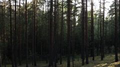 Walking in pine forest gimbal stabilized, strong motion blur Stock Footage