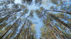 A view to forest from the ground Stock Footage