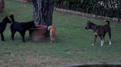 Dogs chasing cat in park, super slow motion 120fps Stock Footage