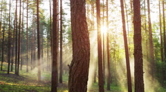 Mystic foggy sunset forest dolly movement Stock Footage
