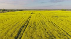Establishing shot, countryside, flight over canola field, aerial. Stock Footage