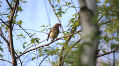 Catbird (thrush) in the wild forest. Stock Footage