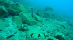 Fishes on the background of the rocky bottom. Stock Footage