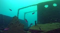 Flocks of fish near the sunken vessel. Stock Footage