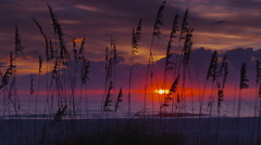 Sea Oats on Sunrise Beach with Purple Sky Stock Footage