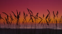 Sea Oats on Beach at Sunrise - Pan L to R Stock Footage
