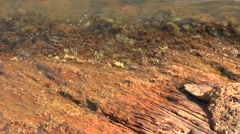 Coastal stones are covered with iron oxides. - stock footage