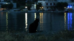 Black cat on a background of water which reflects lights. - stock footage