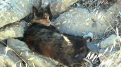 Cat during a siesta on a Greek island. Stock Footage