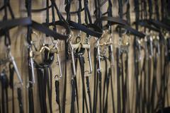 Row of bridles hanging up in stables - stock photo