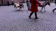 Girls lead two donkeys along the narrow streets of Düsseldorf - stock footage