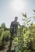 Gardener tending to plants Stock Photos