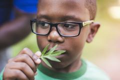 Boy smelling plant in parkland eco camp - stock photo