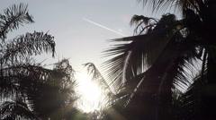 Sun flare through a palm tree Stock Footage