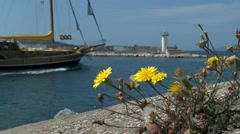Yellow flowers growing on the port breakwater . - stock footage