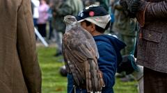 Boy holding a hawk bird in hand Stock Footage