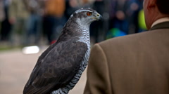 Man in suit holding grown-up buzzard Stock Footage