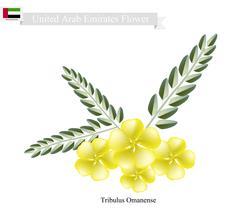 Tribulus Omanense, The Native Flower of United Arab Emirates Stock Illustration