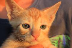 Cute domestic kitten. - stock illustration