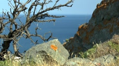 Landscape with withered tree and rocks against the sea. Stock Footage