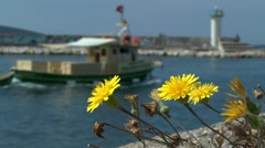 Yellow flowers growing on the port breakwater . Stock Footage