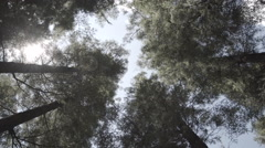 Spinning below tall trees Stock Footage