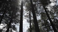 Sunlight shining trough tall trees Stock Footage