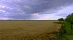 Wheatfield beneath cloudy sky Stock Footage