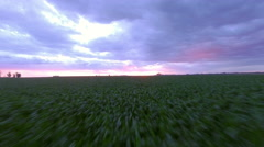 Crops growing in field Stock Footage