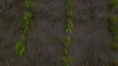 Seedlings growing in field Stock Footage