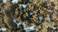 Bird's eye view flying over evergreen forest in Patagonia, South America Stock Footage
