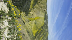 MoCo Tracking Time Lapse of Wildflower Super Bloom in Carrizo Plain -Vertical- Stock Footage