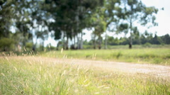 Woman riding bicycle along rural bicycle path Stock Footage
