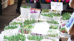 Tulip bouquets for sale in flower market in Amsterdam, Netherlands - stock footage