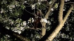 Black cat on the tree Stock Footage