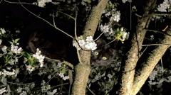 black cat on the tree - stock footage