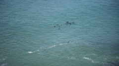 Aerial view of seals swimming in ocean Stock Footage