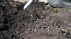 Man is digging ground in the garden Stock Footage