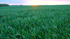 sunset over grass field - stock footage
